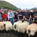 Leenane Blackface Sheep Show 2013