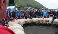 Leenane Blackface Sheep Show
